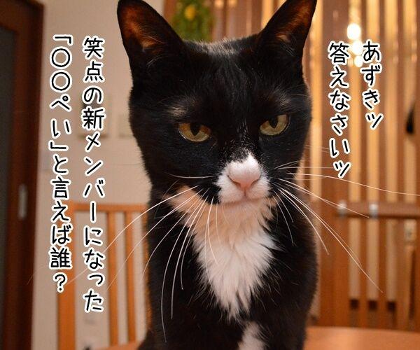 『笑点』大喜利の新メンバー決定!! 猫の写真で4コマ漫画 1コマ目ッ