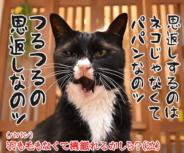 ジブリの猫の恩返しって知ってる? 猫の写真で4コマ漫画 4コマ目ッ