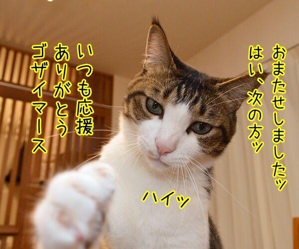 猫の握手会 猫の写真で4コマ漫画 3コマ目ッ