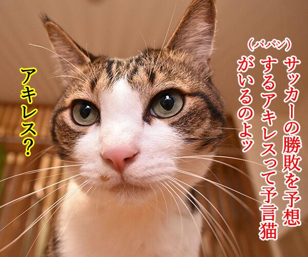予言猫アキレスはW杯開幕戦を見事的中なのッ 猫の写真で4コマ漫画 1コマ目ッ