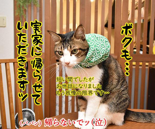お盆だから実家に帰ろうと思うの 猫の写真で4コマ漫画 3コマ目ッ