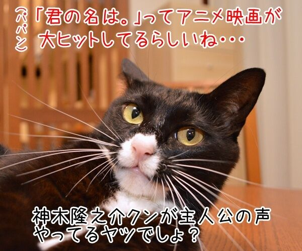 映画『君の名は。』の興行収入が62億円突破なんですってッ 猫の写真で4コマ漫画 1コマ目ッ