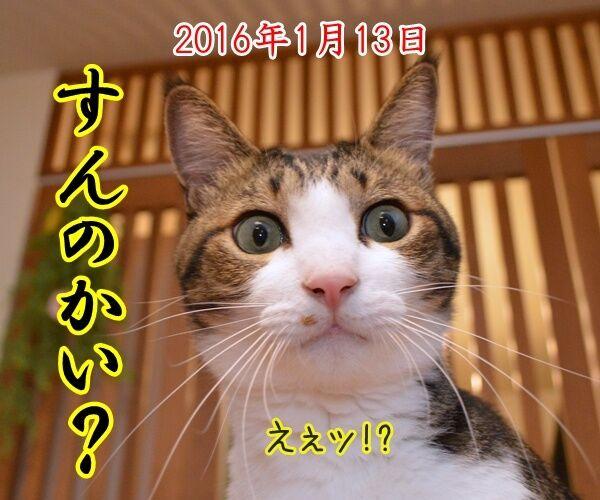 ドリルすんのかいせんのかい 猫の写真で4コマ漫画 1コマ目ッ