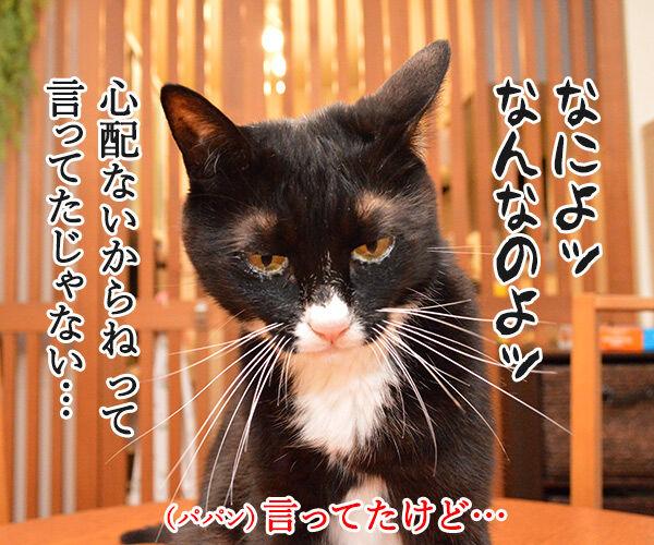 非アルコール性脂肪肝(NASH)になっちゃったの 猫の写真で4コマ漫画 3コマ目ッ