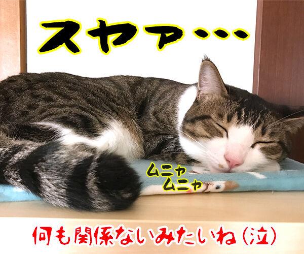 『ねこのための音楽~Music for Cats~』を聴かせてみたのッ 猫の写真で4コマ漫画 4コマ目ッ