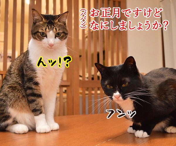 お正月にするコト 猫の写真で4コマ漫画 1コマ目ッ