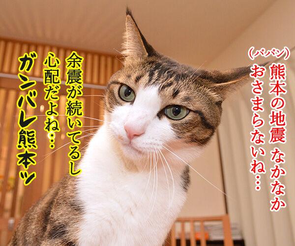 熊本地震 気を付けなくちゃいけないコト猫の写真で4コマ漫画 1コマ目ッ