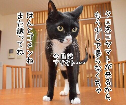 クロネコヤマトが来るから帰らなくちゃッ 猫の写真で4コマ漫画 1コマ目ッ