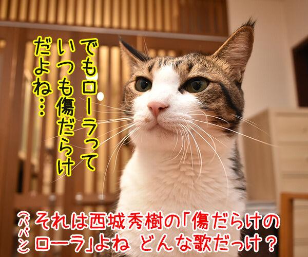 ローラさんが保険所から猫を引き取って家族にしたんですってッ 猫の写真で4コマ漫画 3コマ目ッ