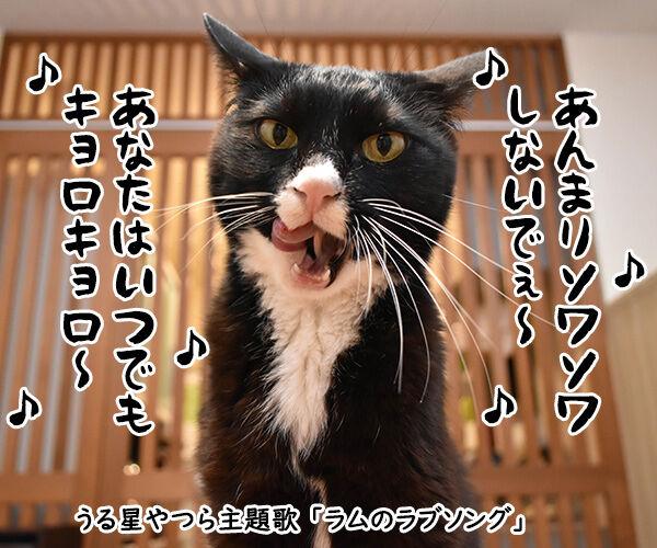 『うる星やつら』の高橋留美子先生が紫綬褒章だから唄うのよッ 猫の写真で4コマ漫画 1コマ目ッ