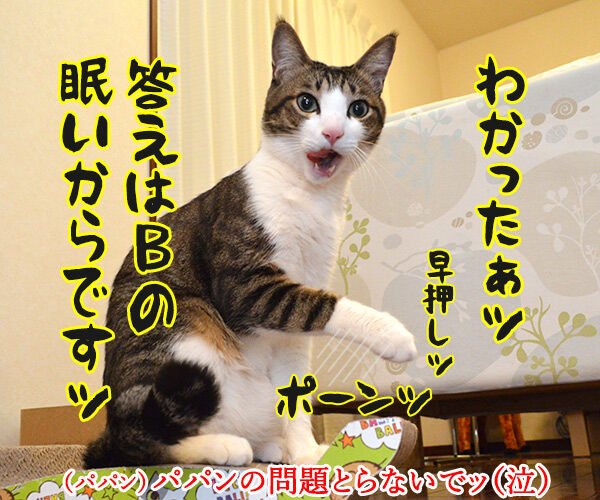 教えてッ だいず先生ッ 其の一 猫の写真で4コマ漫画 3コマ目ッ