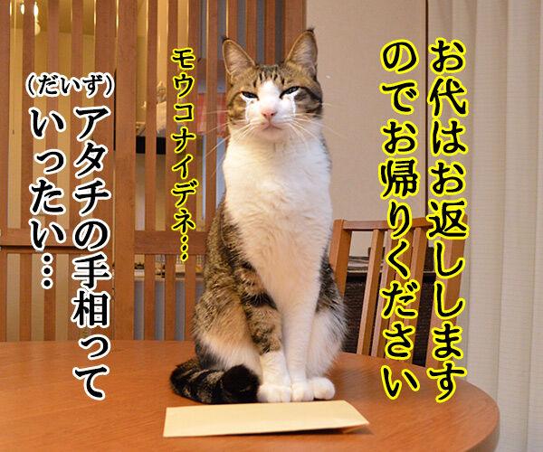 肉球うらない 猫の写真で4コマ漫画 4コマ目ッ