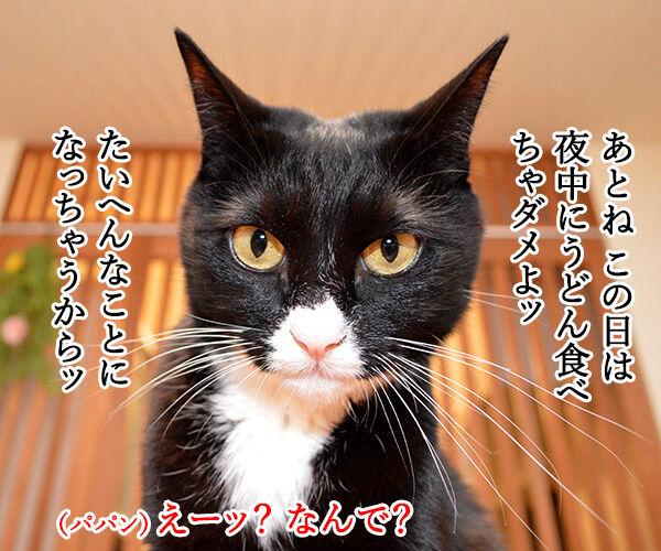 2月4日は『西の日』なんですってッ 猫の写真で4コマ漫画 3コマ目ッ