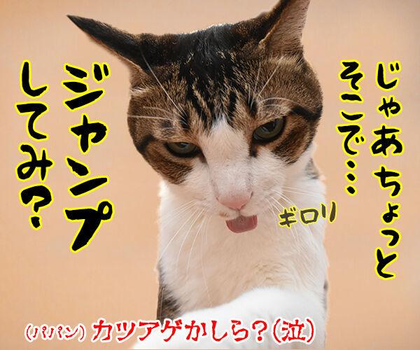 あずきさん ごはんだよぉー 猫の写真で4コマ漫画 4コマ目ッ