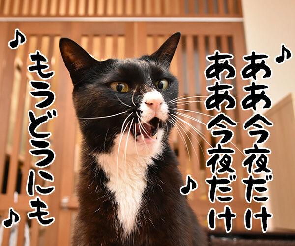 ♪うわさを信じちゃいけないよッ 猫の写真で4コマ漫画 3コマ目ッ