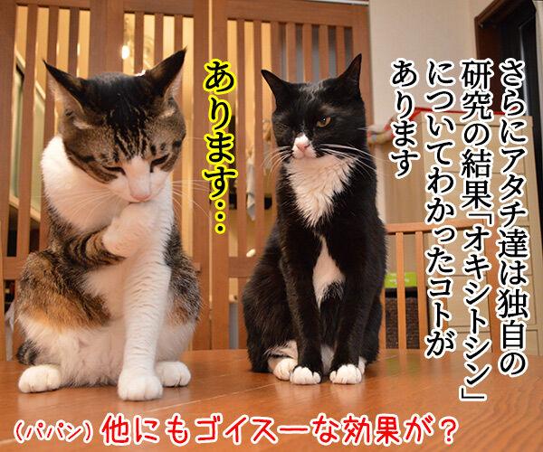 猫さんを撫でると「愛情ホルモン」が出るんですってッ 猫の写真で4コマ漫画 3コマ目ッ