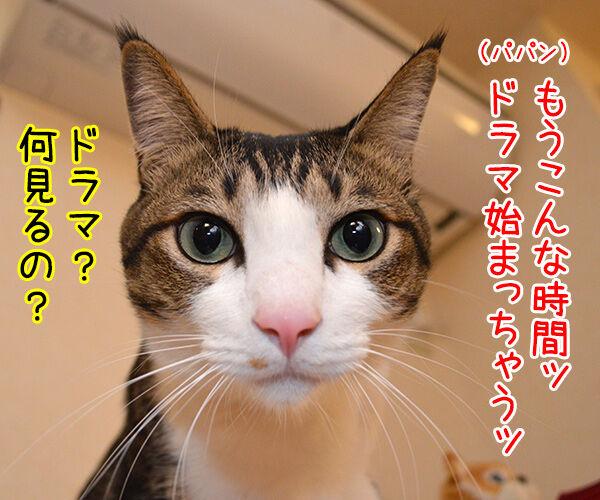 明日、ママがいない? 其の一 猫の写真で4コマ漫画 1コマ目ッ