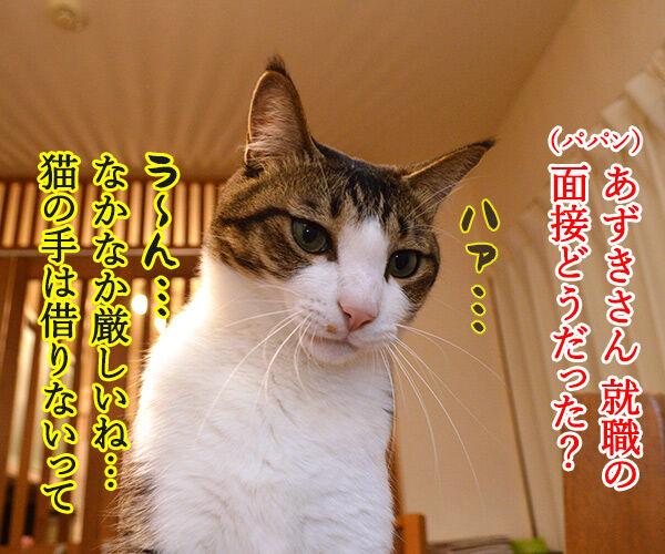 就職活動に必要なもの 猫の写真で4コマ漫画 1コマ目ッ