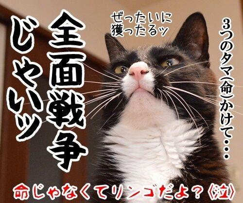 算数の問題ですッ!! 猫の写真で4コマ漫画 4コマ目ッ