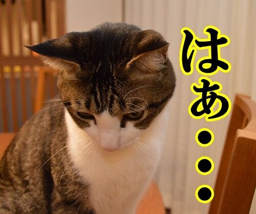 ためいきの理由 猫の写真で4コマ漫画 2コマ目ッ