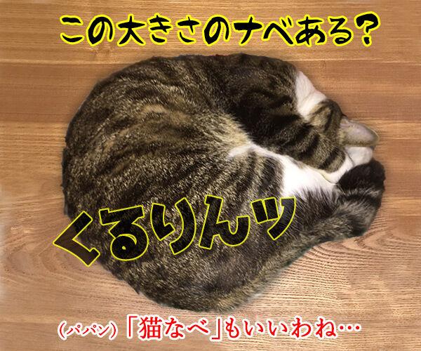 きょうは『鍋の日』なんですってッ 猫の写真で4コマ漫画 2コマ目ッ