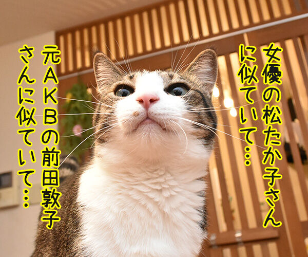 松たか子と前田敦子と沢尻エリカ 猫の写真で4コマ漫画 1コマ目ッ