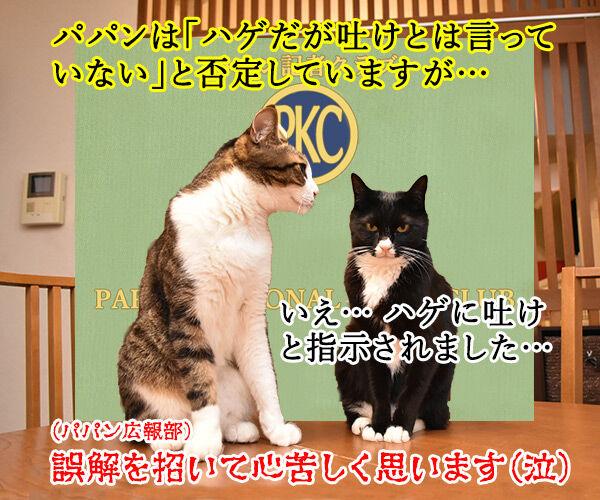 日大悪質タックル選手の記者会見みたいに… 猫の写真で4コマ漫画 4コマ目ッ