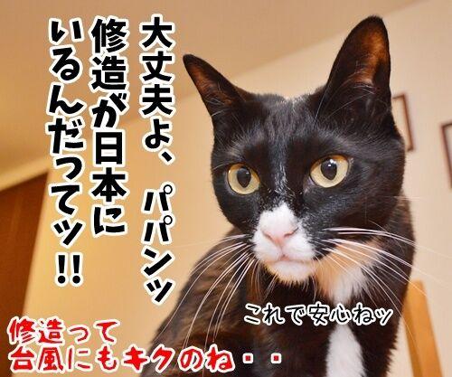 台風が来てるけど 猫の写真で4コマ漫画 4コマ目ッ