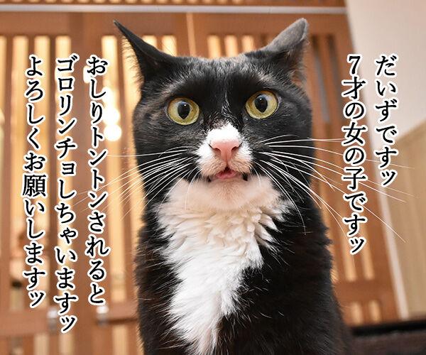 あずきとだいずをよろしくお願いしまーすッ 猫の写真で4コマ漫画 2コマ目ッ