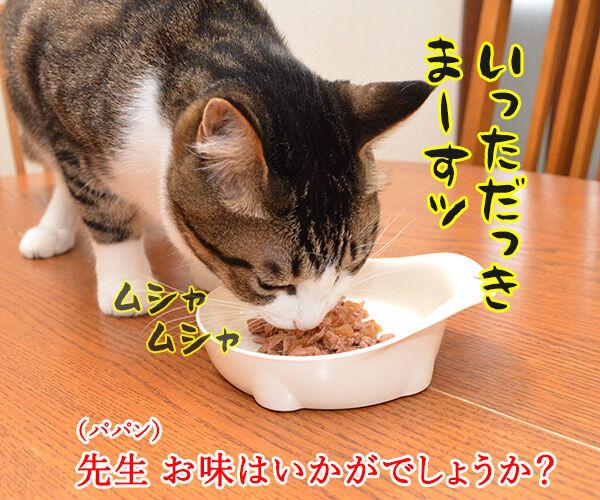 先生、お味はいかがでしょうか? 猫の写真で4コマ漫画 2コマ目ッ