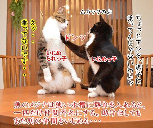 イジメ・ダメ・ゼッタイ 猫の写真で4コマ漫画 1コマ目ッ