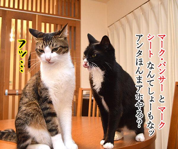 夫婦漫才 ミカとジョージ 其の五 猫の写真で4コマ漫画 3コマ目ッ