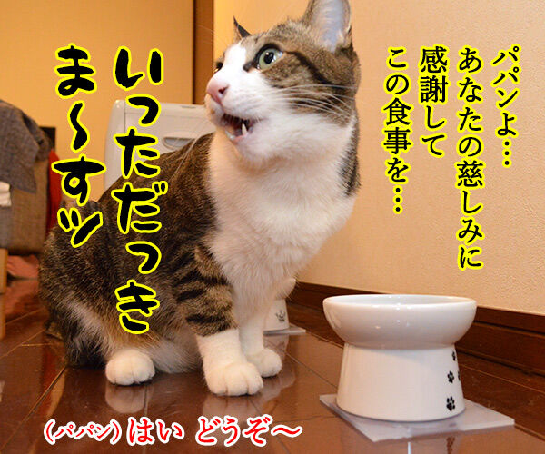 今日はバレンタインデーだから… 猫の写真で4コマ漫画 1コマ目ッ