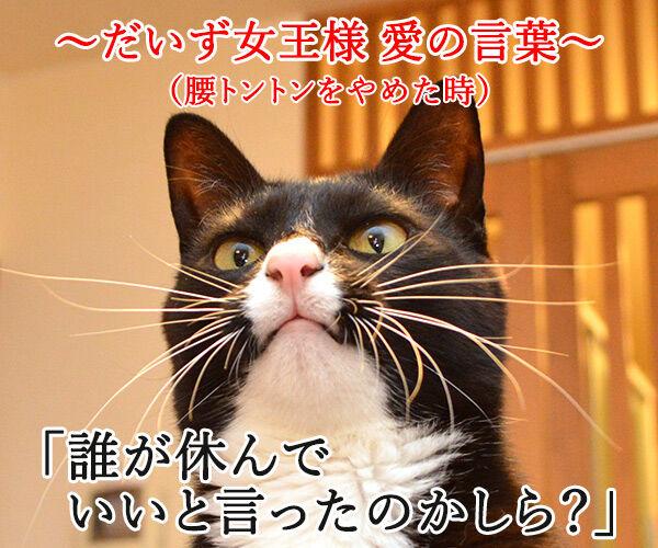 だいず女王様 愛の言葉 猫の写真で4コマ漫画 3コマ目ッ
