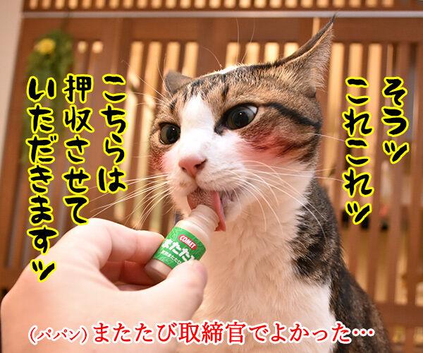 パパンちにマトリが家宅捜索なのッ 猫の写真で4コマ漫画 2コマ目ッ