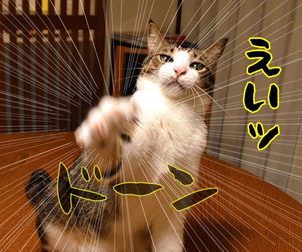 今、猫さんに売れてますッ!! 猫の写真で4コマ漫画 1コマ目ッ