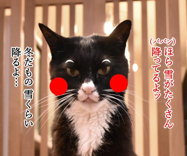 助けて!!だいずモン 其の二 猫の写真で4コマ漫画 2コマ目ッ