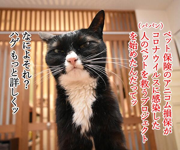 コロナ感染者のペットを無償で預かってくれるんですってッ 猫の写真で4コマ漫画 1コマ目ッ