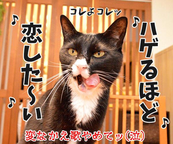 ゲレンデがとけるほど恋したい 猫の写真で4コマ漫画 4コマ目ッ