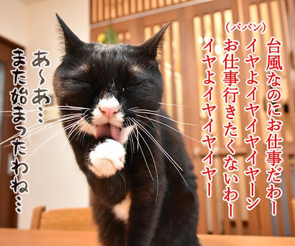 台風だから行きたくないわー 猫の写真で4コマ漫画 1コマ目ッ