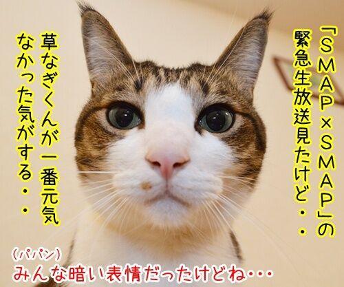 スマスマ緊急生放送を見て…… 猫の写真で4コマ漫画 1コマ目ッ