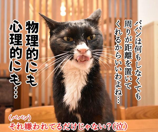 ソーシャルディスタンスのあるあるなのよッ 猫の写真で4コマ漫画 2コマ目ッ