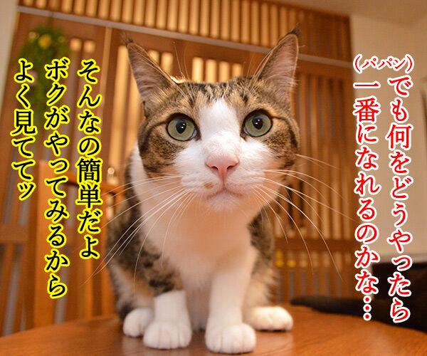 心理カウンセラー だいず 猫の写真で4コマ漫画 3コマ目ッ