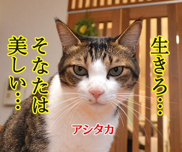 もののけ姫とアシタカとサン 猫の写真で4コマ漫画 3コマ目ッ