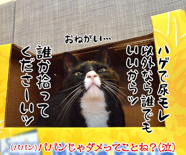 捨て猫物語 猫の写真で4コマ漫画 4コマ目ッ