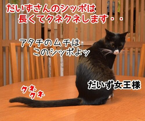 女王様の命令は絶対 猫の写真で4コマ漫画 1コマ目ッ