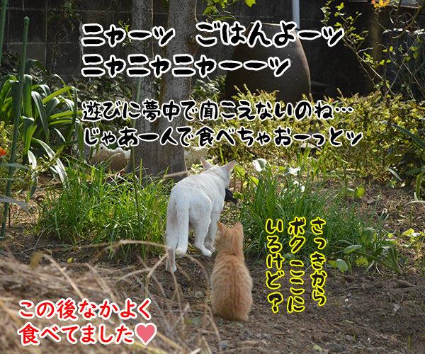 猫島 其の三 猫の写真で4コマ漫画 4コマ目ッ