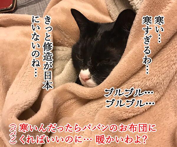寒い夜はパパンのお布団で寝ませんこと? 猫の写真で4コマ漫画 2コマ目ッ