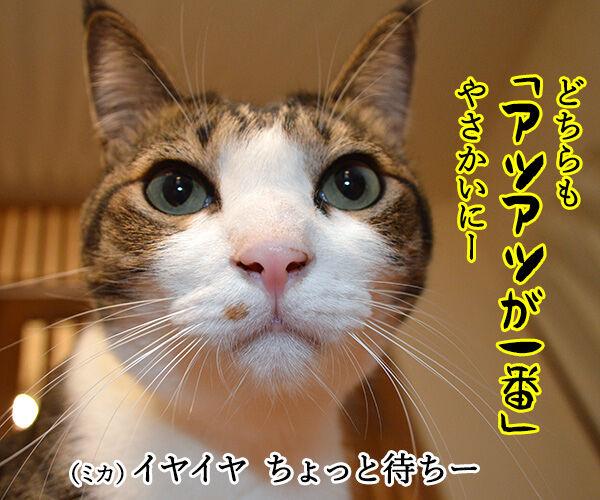 夫婦漫才 ミカとジョージ 其の三 猫の写真で4コマ漫画 2コマ目ッ