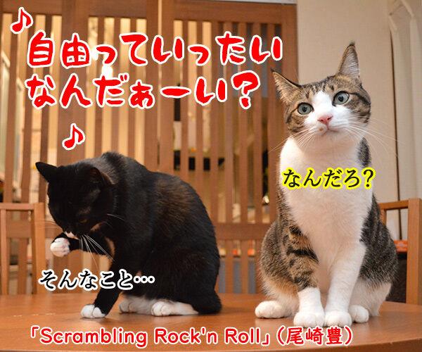 自由っていったいなんだぁーい? 猫の写真で4コマ漫画 1コマ目ッ